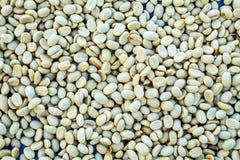 Pilha do feijão de café unroasted fresco da goma-arábica Fotos de Stock Royalty Free