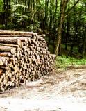 Pilha do feixe de madeira fotografia de stock