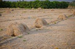 Pilha do feno seco na exploração agrícola Fotos de Stock