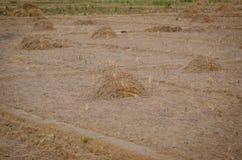 Pilha do feno seco na exploração agrícola Foto de Stock
