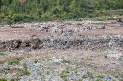 Pilha do lixo doméstico na operação de descarga Foto de Stock