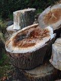 Pilha do log Foto de Stock Royalty Free