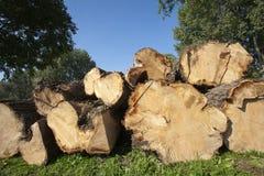 Pilha do log Fotografia de Stock Royalty Free