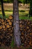 Pilha do log Imagens de Stock Royalty Free