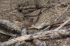 Pilha do log perto de um córrego foto de stock royalty free