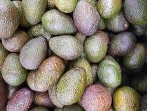 Pilha dos abacates Imagem de Stock Royalty Free