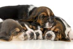 Pilha dos filhotes de cachorro Imagens de Stock Royalty Free