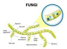 Pilha dos fungos ilustração stock