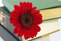 Pilha dos livros com uma flor. Imagem de Stock