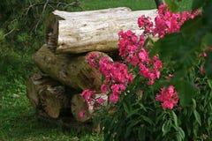 Pilha dos logs e das rosas Fotografia de Stock Royalty Free