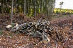 Pilha dos logs e dos ramos Imagens de Stock