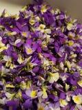 Pilha dos pansies Imagem de Stock Royalty Free