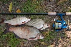 Pilha dos peixes comuns da brema, de peixes crucian ou de Carassius, barata Imagem de Stock Royalty Free