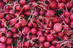 Pilha dos radishes Fotografia de Stock