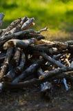 Pilha dos ramos Imagem de Stock Royalty Free
