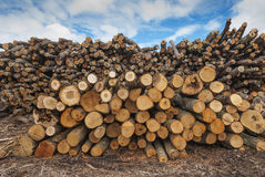 Pilha dos registros de madeira Imagem de Stock