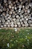 Pilha dos registros de madeira foto de stock royalty free