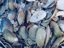 Pilha dos shell Imagens de Stock