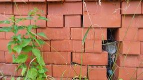 Pilha e provocação dos tijolos vermelhos Imagem de Stock Royalty Free