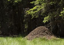 Pilha grande da formiga Imagens de Stock Royalty Free