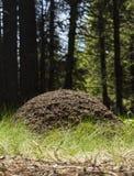 Pilha grande da formiga Foto de Stock Royalty Free