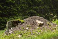 Pilha grande da formiga Fotos de Stock