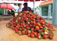 Pilha grande das morangos no contador do mercado central de Voronezh Imagem de Stock