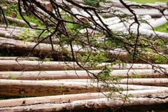 Pilha grande de troncos de árvore maciços ao lado da floresta durante o outono fotos de stock royalty free