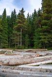 Pilha grande de troncos de árvore maciços ao lado da floresta durante o outono fotos de stock