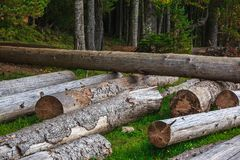 Pilha grande de troncos de árvore maciços ao lado da floresta durante o outono fotografia de stock