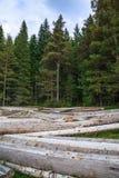 Pilha grande de troncos de árvore maciços ao lado da floresta durante o outono imagem de stock