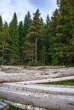 Pilha grande de troncos de árvore maciços ao lado da floresta durante o outono fotografia de stock royalty free