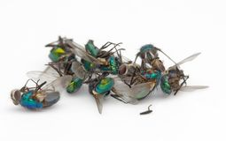Pilha inoperante da mosca Fotografia de Stock
