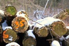 Pilha número trinta e cinco da lenha na laranja Imagens de Stock Royalty Free