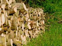 Pilha nas madeiras Fotografia de Stock