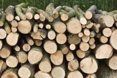 Pilha nas madeiras Imagens de Stock