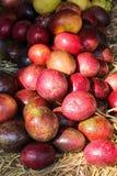 Pilha orgânica colorida do fruto da paixão vermelha no fundo do arroz da palha fotografia de stock