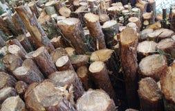 Pilha recentemente de estacas de madeira do corte na floresta Imagem de Stock Royalty Free