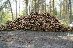Pilha recentemente de estacas de madeira do corte na floresta Imagens de Stock