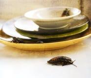 Pilha suja da cozinha dos pratos sujos infestados com imagem de stock