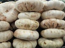 3 pilhas da grande abóbora orgânica branca lisa fresca Imagem de Stock