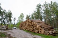 Pilhas da madeira Imagens de Stock