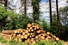 Pilhas da madeira Imagem de Stock