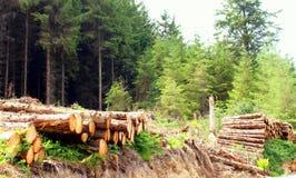 Pilhas da madeira Fotografia de Stock
