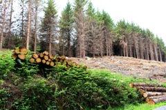 Pilhas da madeira Fotografia de Stock Royalty Free