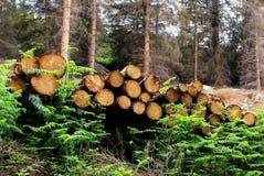 Pilhas da madeira Fotos de Stock