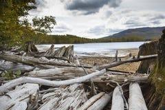 Pilhas da madeira lançada à costa descorada na praia, lago flagstaff, Maine fotos de stock royalty free