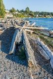 Pilhas da madeira lançada à costa do litoral fotografia de stock