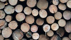 Pilhas da madeira vista Imagem de Stock