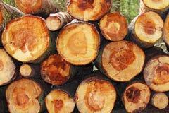Pilhas da madeira vista Imagens de Stock Royalty Free
